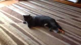 Boulder hits my cat
