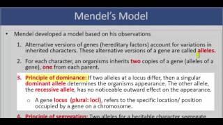 OAT®:  Classical Genetics – Part I: Alleles, dominance and recessiveness