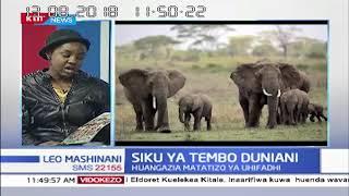 Changamoto la kuhifadhi tembo nchini Kenya   LEO MASHINANI