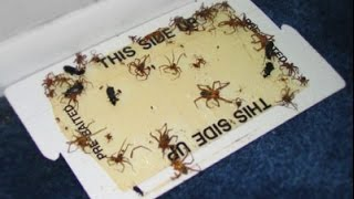 How To Make A Homemade Spider Trap
