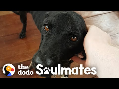 Guy Saves Starving Dog On Deserted Island | The Dodo Soulmates