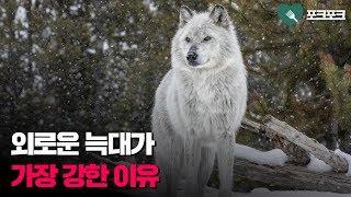 외로운 늑대들이 결국 이기는 이유