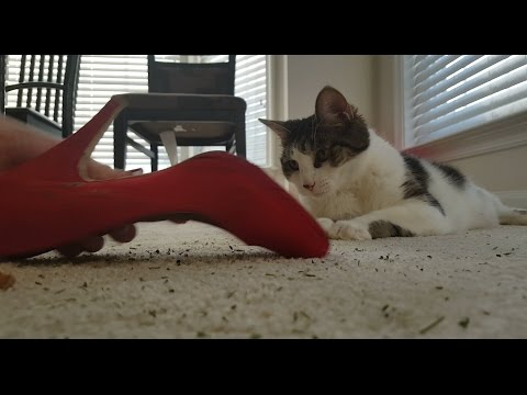 Catnip for Shoes/parody/Funny videos/Spoof/Silly ad/cats