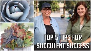 Top 5 Tips for Succulent Success (2015)