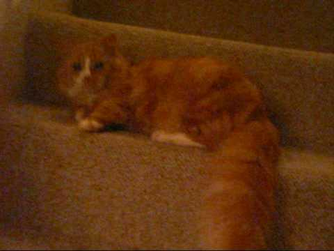 Cat Falls Down Stairs