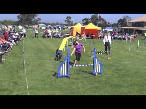 State Trial Victoria 2014- Top Dog Jumping & Agility Kayladene Girlz