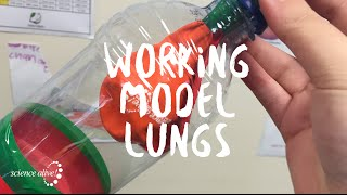 Lung Model Science Alive