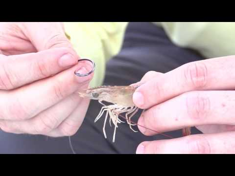 Catching Catfish With Worms (Nightcrawlers) from YouTube · Duration:  13 minutes 28 seconds