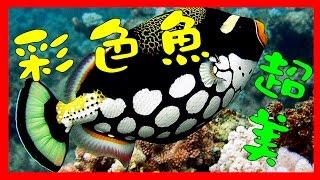 (畫語人生) WOW! 絕美海底世界!50個色彩繽紛的彩色魚,吸睛度100%。Beautiful Underwater World.