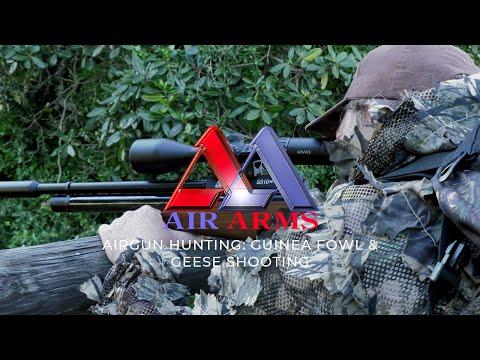 Airgun Hunting: Guinea Fowl & Geese Shooting