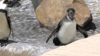Penguin With A Funky Shoe (funky version) - Parry Gripp
