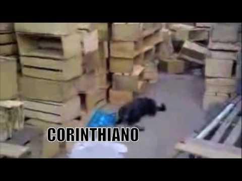 BAIXAR VIDEO CACHORRO CORINTIANO