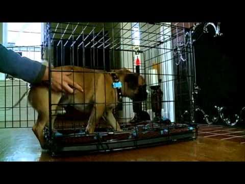 Dog expert shares potty training tips