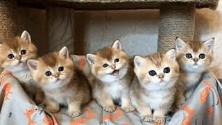 The Cutest Kittens Will Warm Your Heart