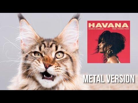 Funny Cat Singing - Havana Camila Cabelo (Metal Version)