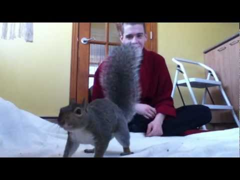 Playing with a Pet Squirrel