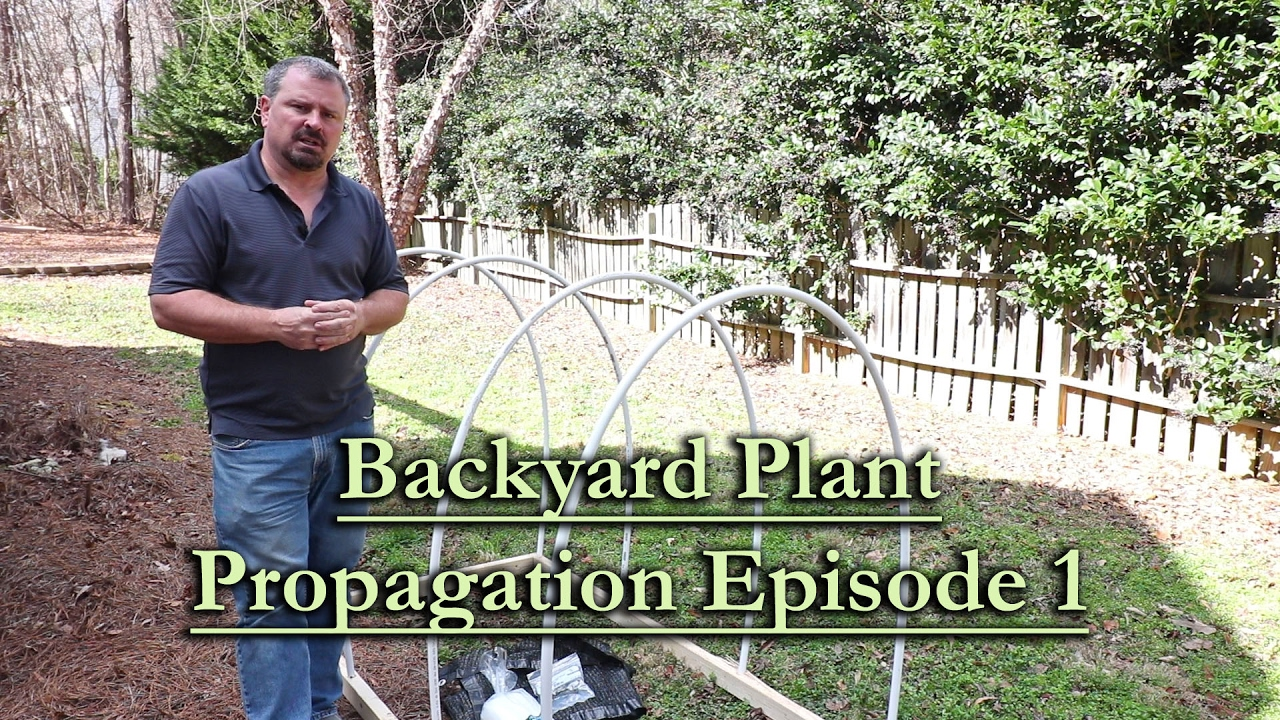 backyard plant propagation episode 1 how to root woody shrub