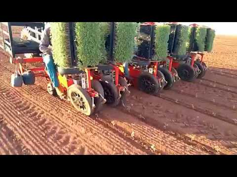 CHECCHI & MAGLI - TEXDRIVE BEST 6 ROWS BRAZIL - TOMATO TRANSPLANTER
