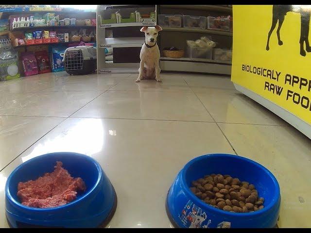 Σκύλος Διατροφή B.A.R.F. Vs Ξηρα Τροφή Μέρος 1ο | Feeders Strs ep6