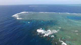The Bleaching of the Great Barrier Reef: Real Sports Bonus Clip (HBO)