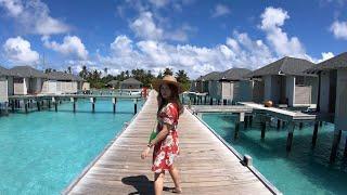SNORKELING WITH SHARKS - AMARI HAVODDA MALDIVES
