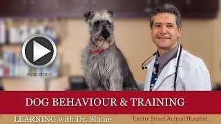 Episode 10: Dog Behaviour And Training With Bark Busters