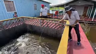 CHARLLES AND TIRINGA FISHING PIRARUCU IN MANAUS AMAZONAS | WILD COMEDY