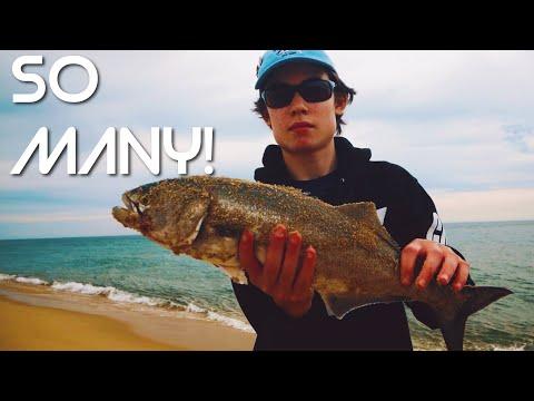 Bluefish At Wasque Point (MV Trip Part 2)