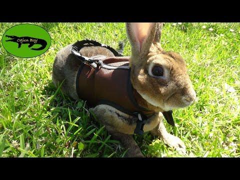 Do Rabbits make good Pets?