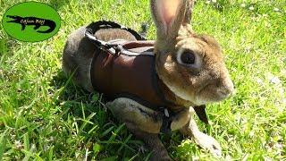 Do Rabbits make good Pets? thumbnail