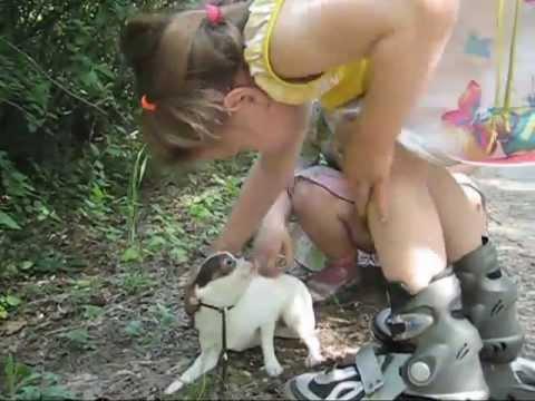 Маленькая девочка гладит собачку щенка чихуахуа ))