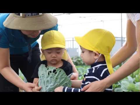 Lớp 2 tuổi hái rau trên sân thượng của trường Quốc tế Nhật Bản (JIS)