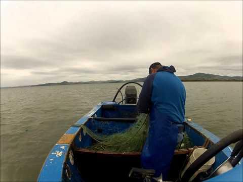 Mullet Fishing