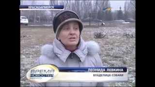 ТК Донбасс - Правила содержания домашних животных