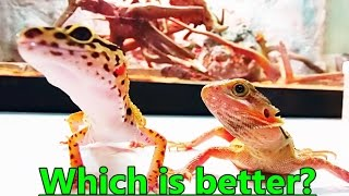 Which pet lizard is better for you? Bearded Dragon or Leopard Gecko(Old Vid)