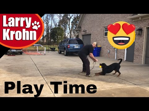 Rottweiler Play Time / Play for training ⚠  POWER BREEDS