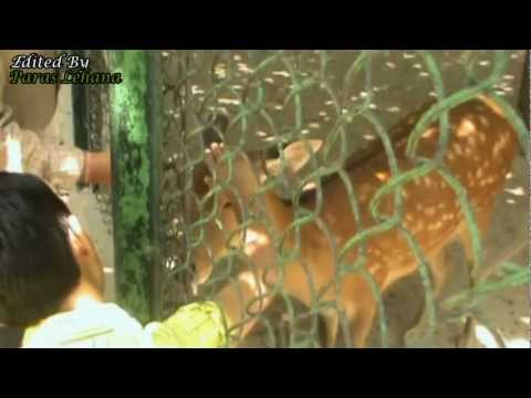National Zoological Park (New Delhi) Tour | All Animals | Videocam [1/2]