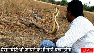 अहमदनगर के केडगांव मे मिले दो बडे साप, सर्पमित्र आकाश जाधव अहमदनगर मो. 9209640006