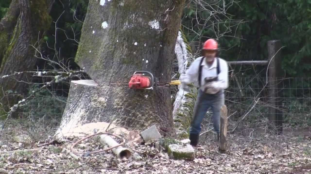 Cut Christmas Trees