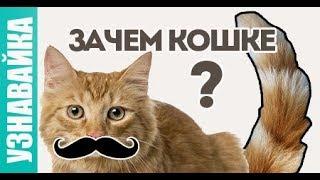 Зачем усы и хвост кошке? Узнавайка