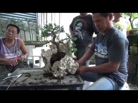 A Day in the Life of Bonsai Iligan: How to Plant on Rock for Penjing