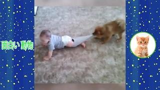 ペットと動物は楽しいです。 このシャネルは、すばらしいおもしろい動物...