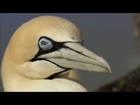 The Physics of Diving Gannets, Bird Navigation, and Speedy