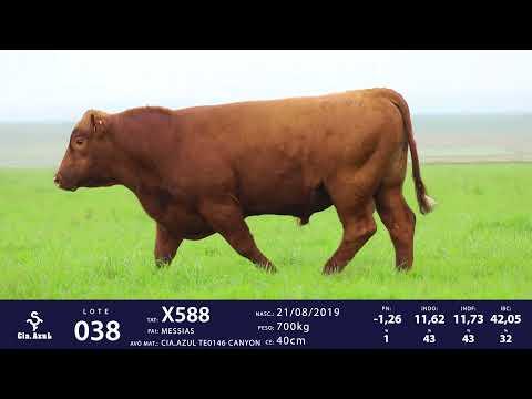 LOTE 38 - TAT X588