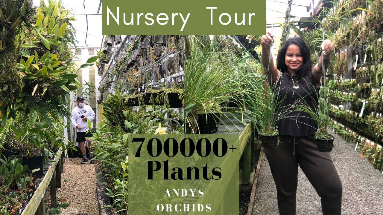 Plant Nursery Tour at Andy's Orchids / Lets take a Look at 700000+ Houseplants