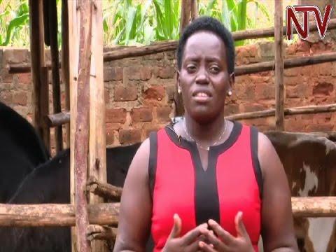 On The Farm: Diana Nsubuga utilizes limited city space for efficient urban farming