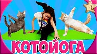 Котойога челлендж. Пародия на уроки по котойоге.  Хвостасана, валясана и Шпагасана. DiLi Play