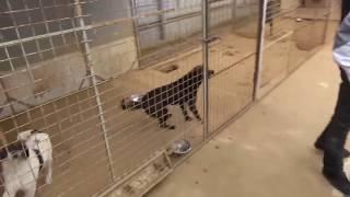 Съездили с Максом в Приют для Бездомных животных и забрали щенка ))) Приют Девять жизней .
