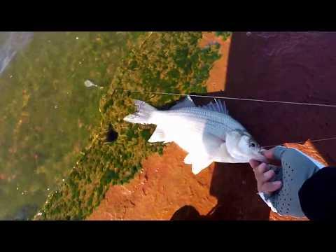 EP.2 Lake Ft.Cobb Oklahoma. Spring Time Hybrids Bass Fishing