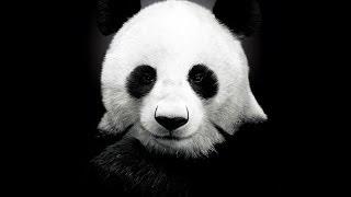 Где Панда? / Возвращение блудной Панды / Джинджер и Панда